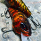"TATER HOG LIZZARD GOBY ""Joey's Hot Sauce Craw"" SR"